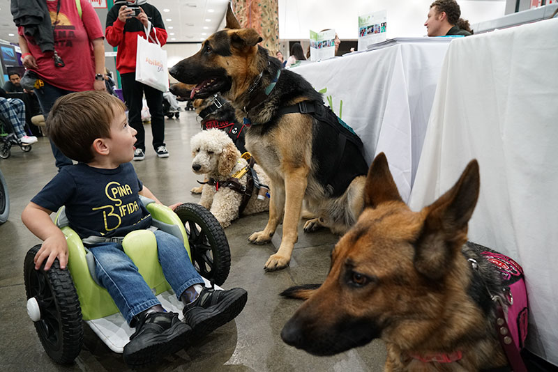 Boy looking at service dogs