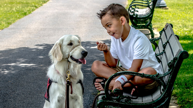 All About Service Dogs