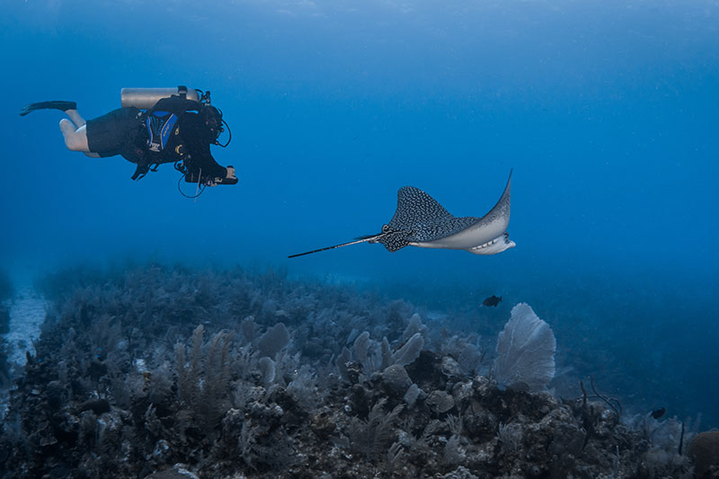 Dive Pirates filming Leapard Ray