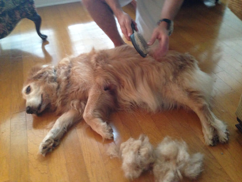 Vacuum for shedding dog