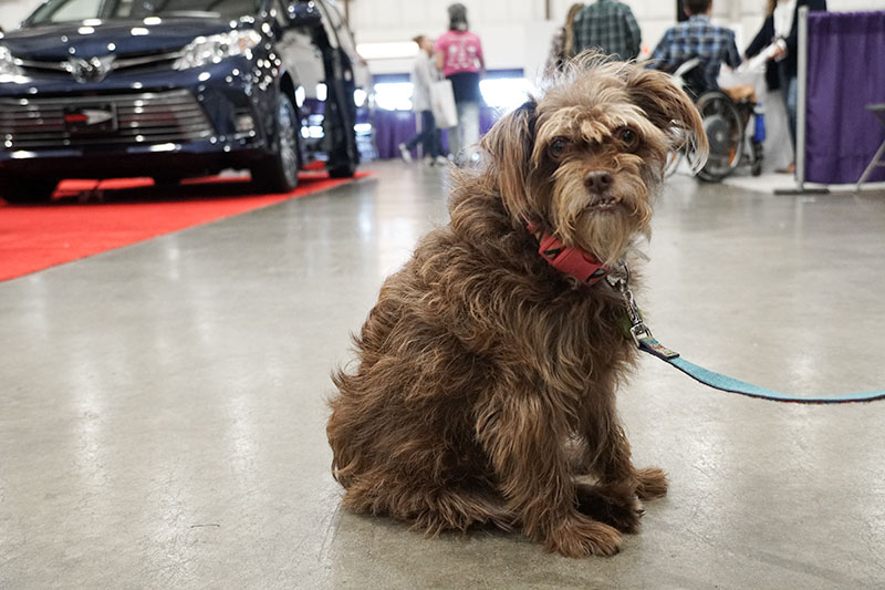 Cute Dog at the Abilities Expo