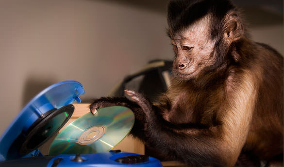 Helper Monkey puts CD in device.