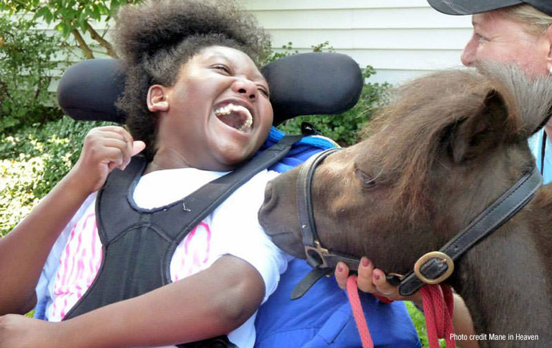 Mini Horses for Therapy