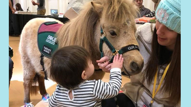 Miniature Therapy Horse Demonstration