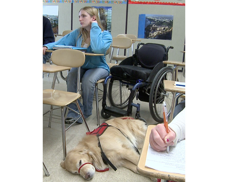 Service dogs in the classroom