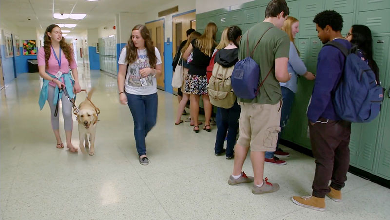 Service Dogs at School