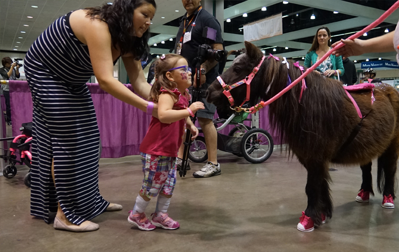 Therapy Horse Demonstration
